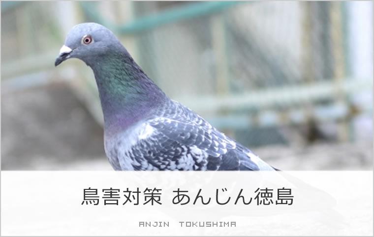 鳥害対策あんじん徳島
