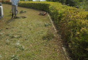 ②宿泊棟芝生清掃中