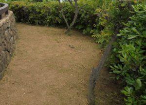 ⑤レストラン棟芝生清掃後